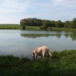 Bolle macht erste Begegnungen mit dem Element Wasser