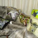 Das Schaf-Kissen liegt nun im Landturm